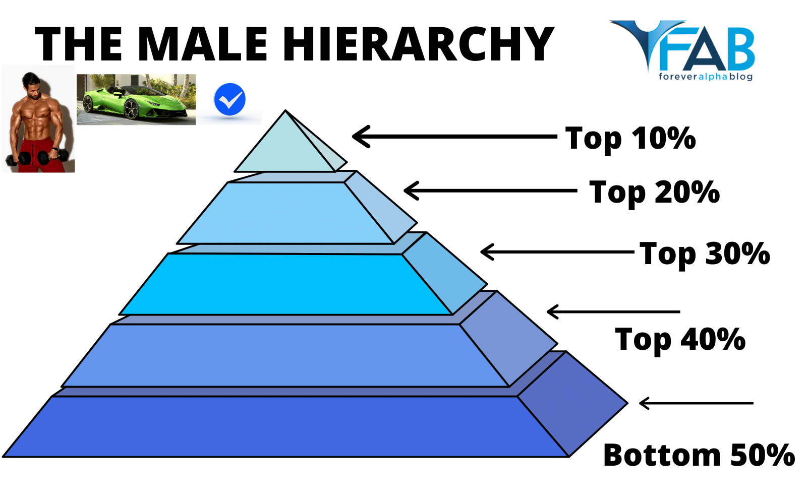The Male Hierarchy